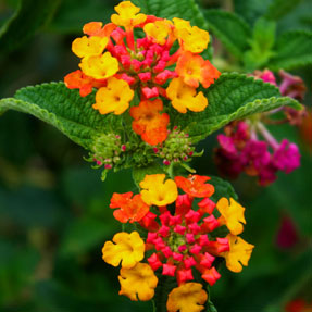 Peruvian Flowers photobook | Fotos de Flores Peruanas